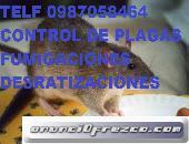 TELF 0987058464 FUMIGACIONES DESRATIZACIONES