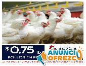 Venta De Pollos Faenados Enteros, Vacíos y Vivos en pie En Quito